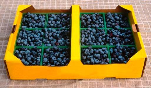 A new twist on Strawberries & Cream: Kahlua Cream Berry Bobs @wishfarms
