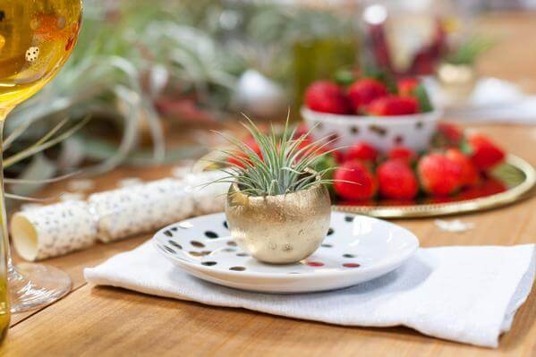 Air Plant Party with Wish Farms Strawberries