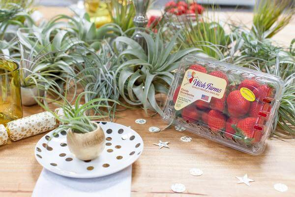 Air Plant Wish Farms Party