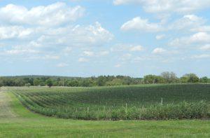 Spring Valley Farms in Umatilla, FL (Florida Blueberry Grower for Wish Farms) #wishfarms
