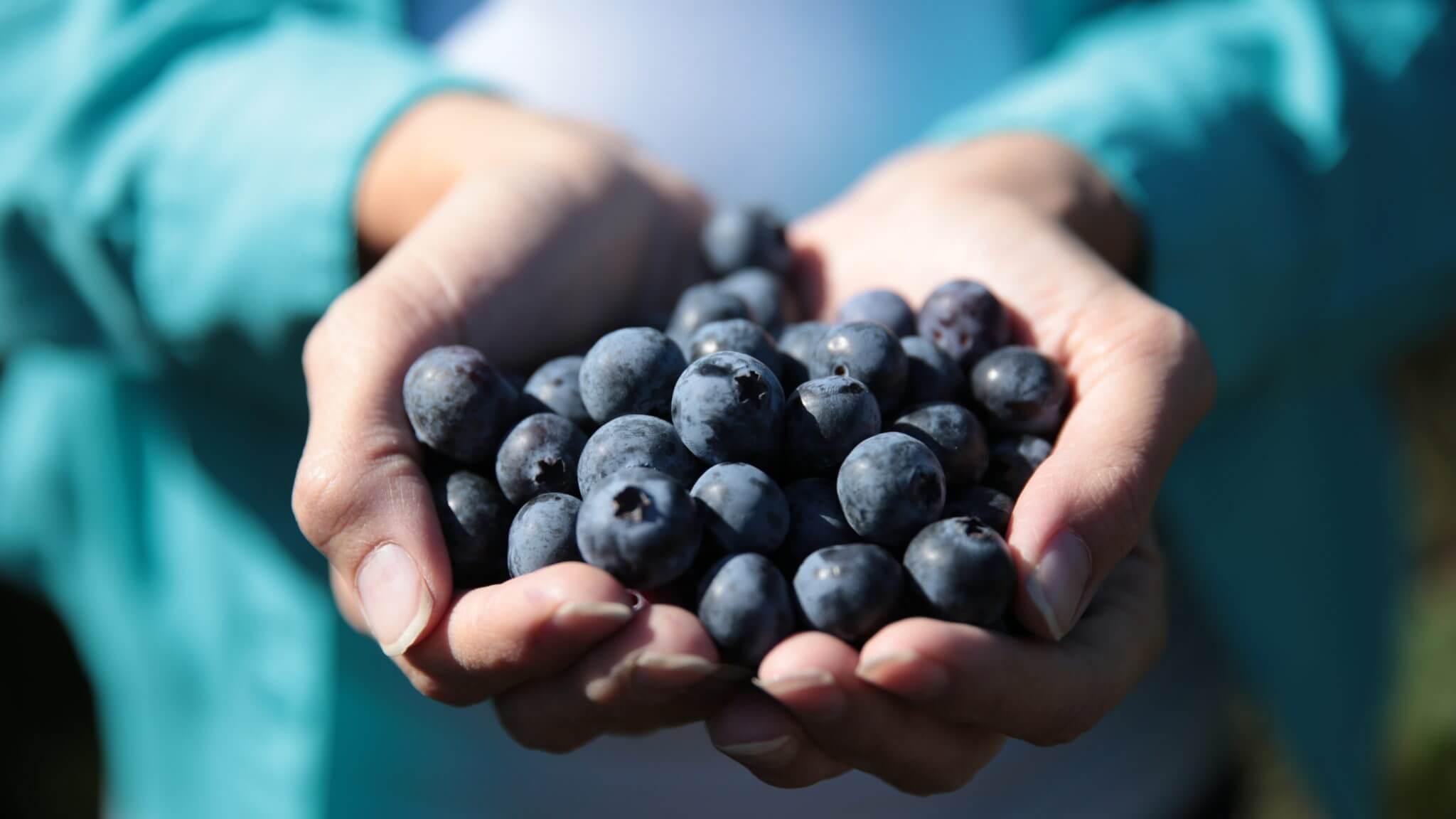Wish Farms Florida Blueberry Festival Sponsor