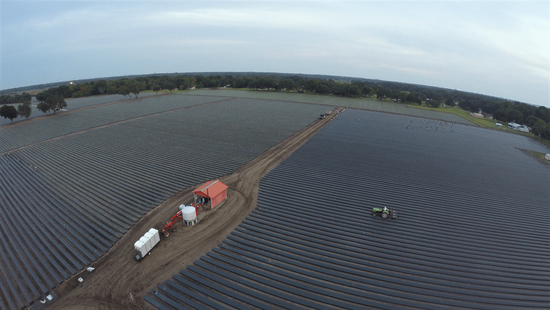 Strawberry Season Planting Wish Farms Plant City FL