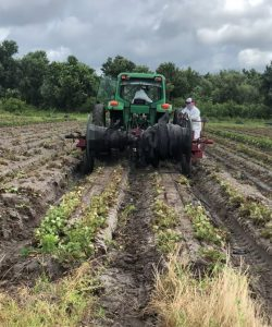 Florida Strawberry Season Wish Farms Plant City