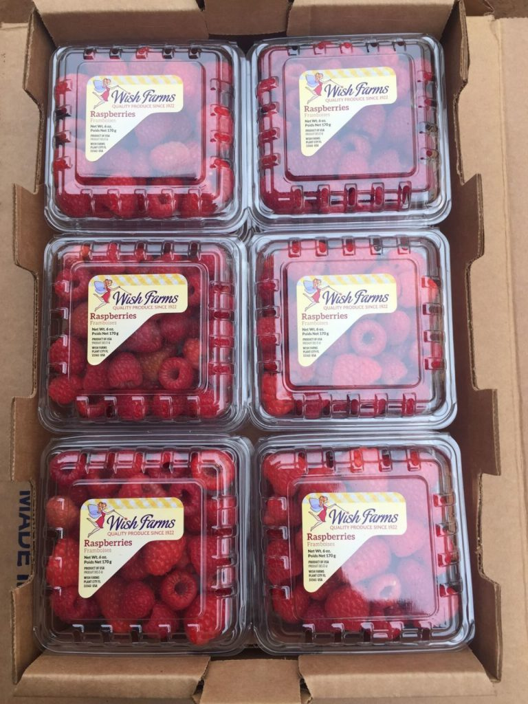 Raspberry Wish Farms Plant City
