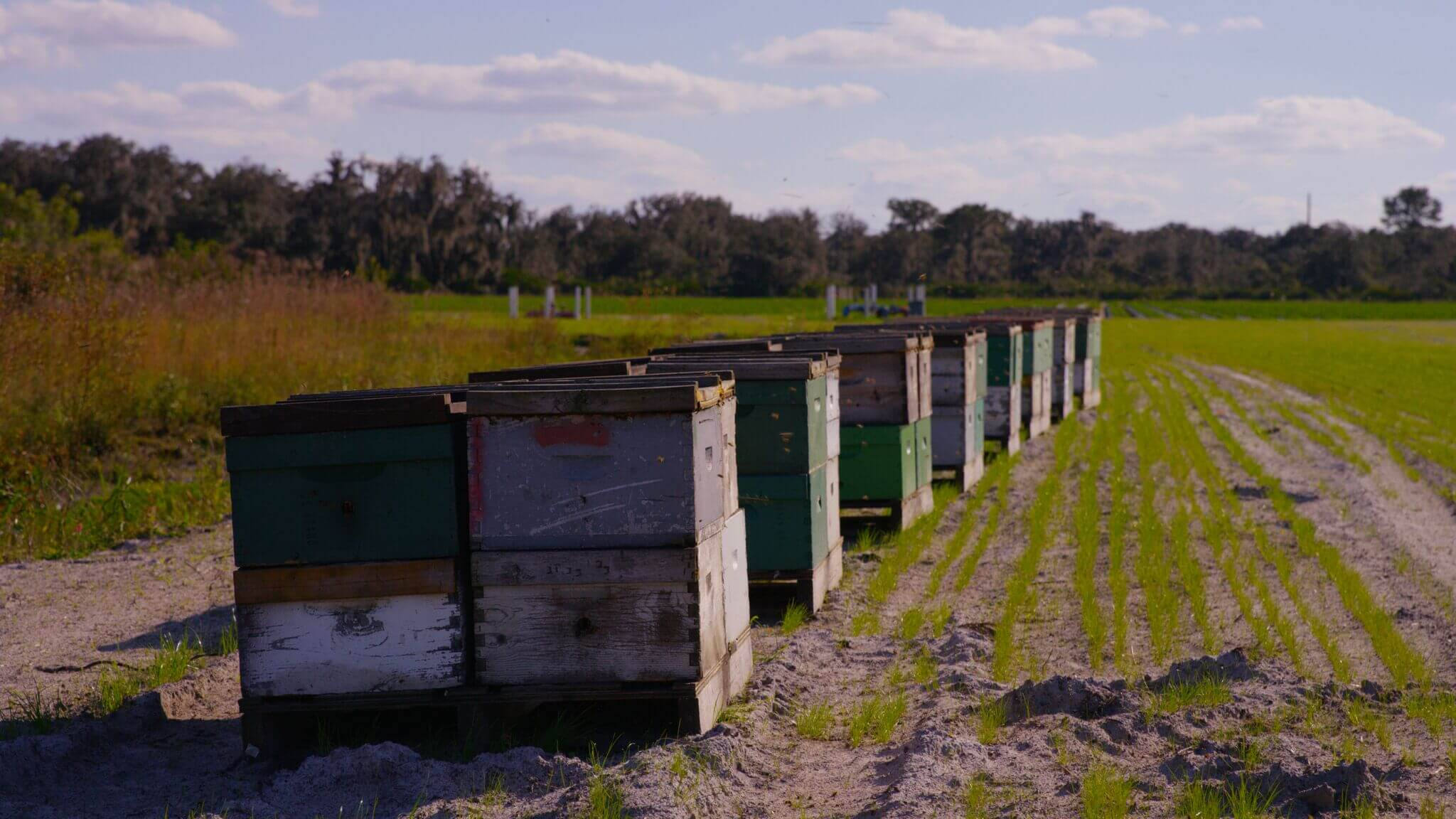 Why bees are important | Wish Farms Florida Strawberry Grower