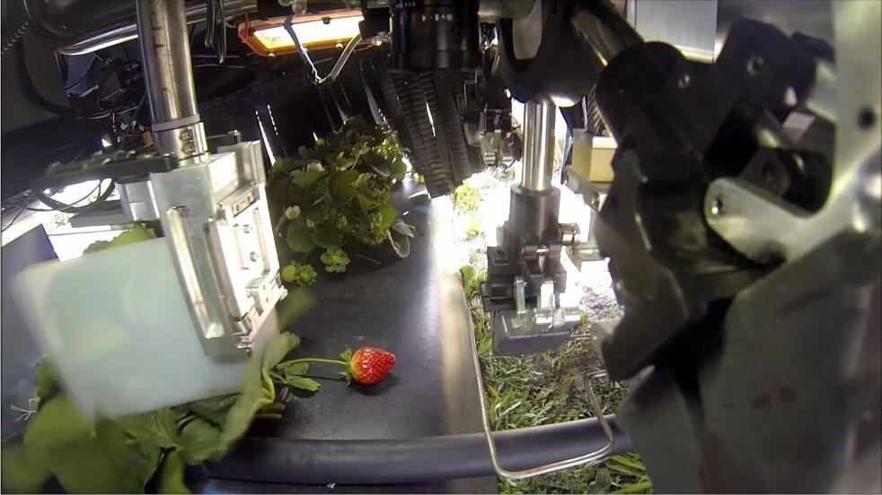 Harvest CROO Farm Technology Wish Farms Produce